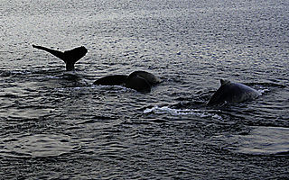 Whales080814_774_001