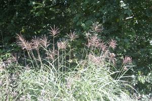 Weedsorig5204