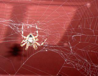 Spider0871