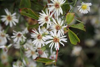Wildflowers8348