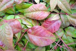 Leaves1628
