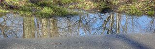 Reflections2375