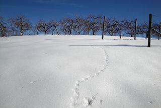 Orchardprints1650