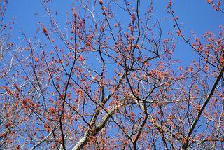 Treeblossoms2376