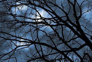 Clouds&tree