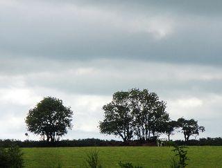 Field&cow