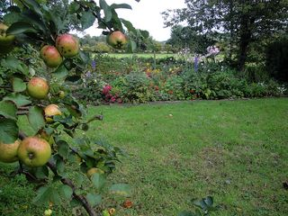 Apples4361