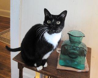 Cat5157
