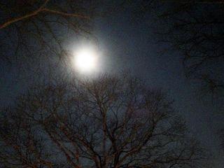 Moon&trees5292