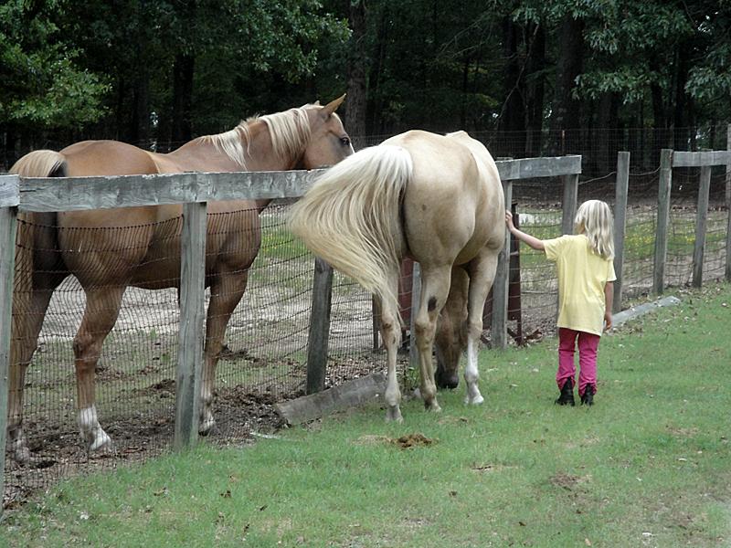 C&horses