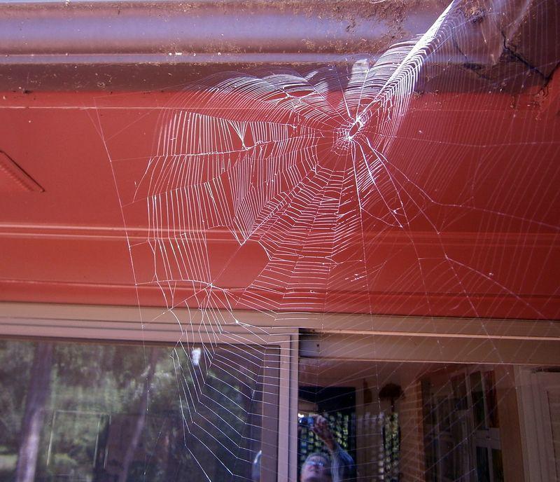 SpiderwebP8260048