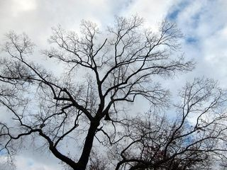Wintertree0910