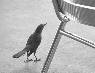Bird1458