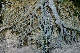 Tree0114
