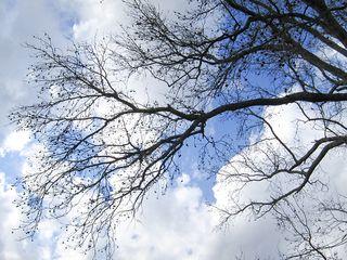 Tree1657