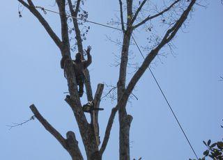Tree guy1949