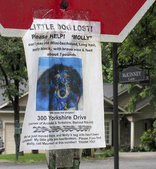 Lost dog3085