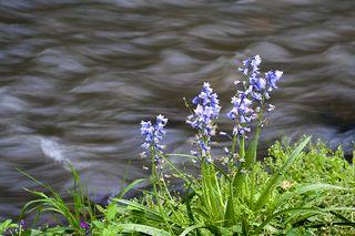 FlowersatReedy0261