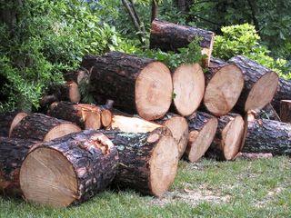 Logs3078