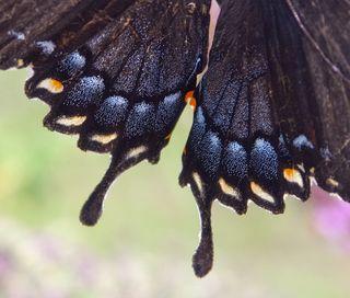 Wings0505