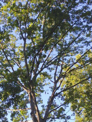 Tree1331
