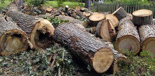Stumps1333