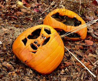 PumpkinsIMG_1606