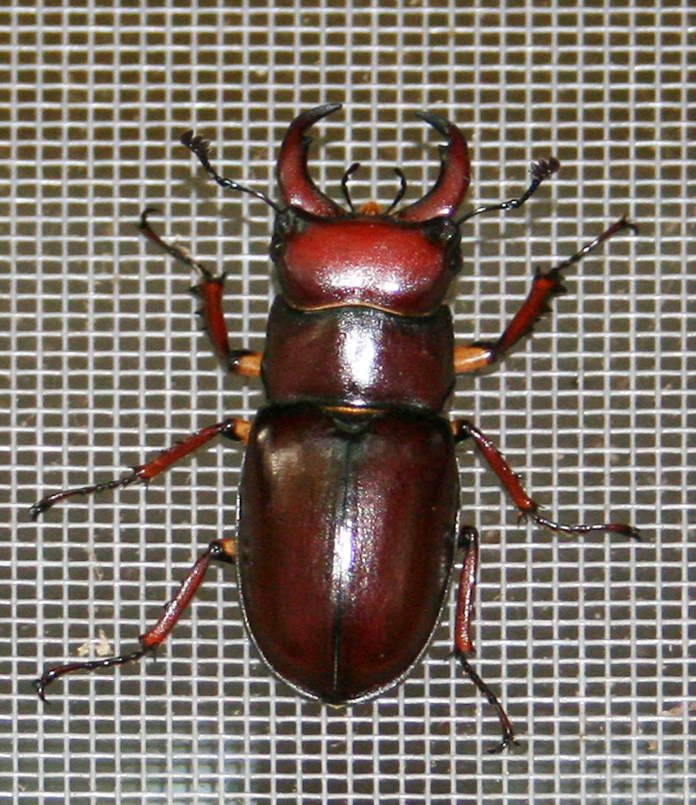 Beetle2223b