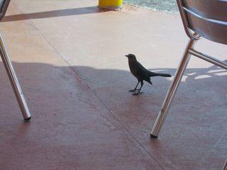 BirdMiami1457