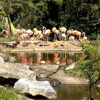 Flamingos2673