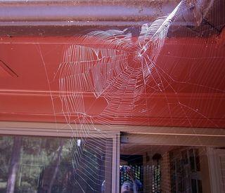 SpiderwebP8260048b
