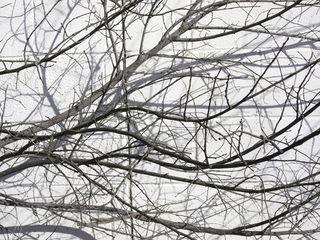 Branches&Shadows