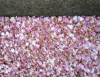 Blossomsincurb