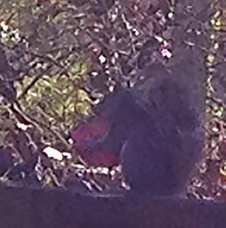 Squirrel&camellia
