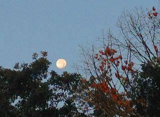 Morning moon4108