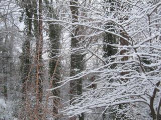 Trees5182