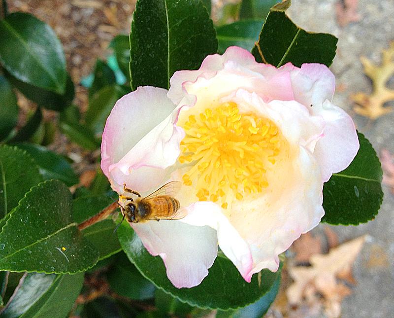 Bee1263