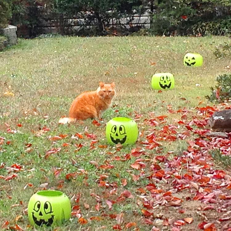 Cat1510