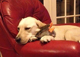 Thomas & duck