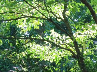 Leaves1044
