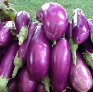 Eggplants1382