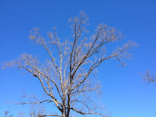 TreeIMG_1996