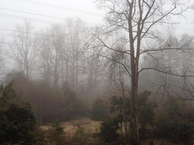Fog5610