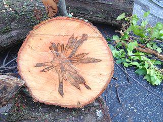 Treeslice1