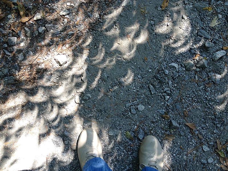 Eclipseshadows0993