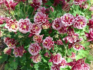 Gardenstairs2244