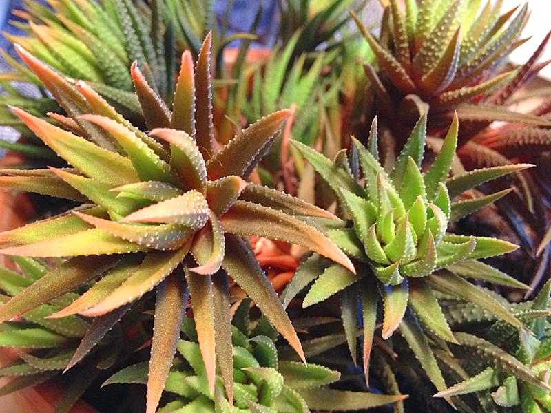 Plant2290
