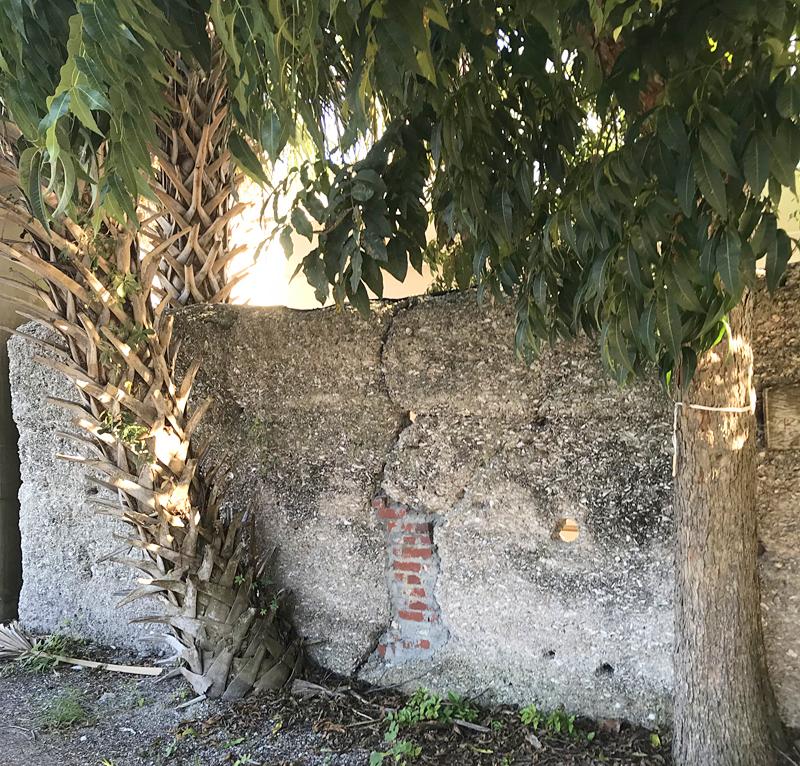 Tabby wall 1232