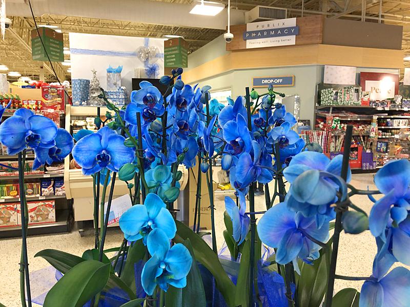 Blueorchids3494