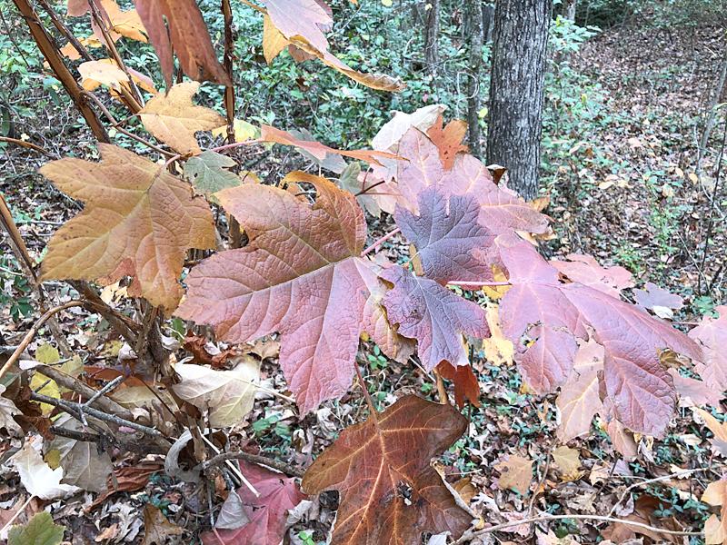 Leaves4994